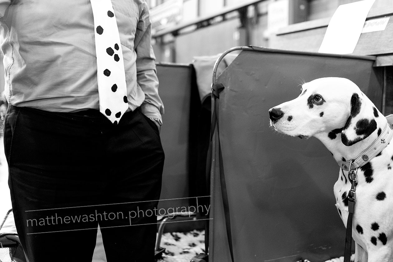Crufts editorial Photography